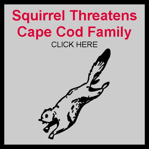 Squirrel Threatens Cape Cod Family