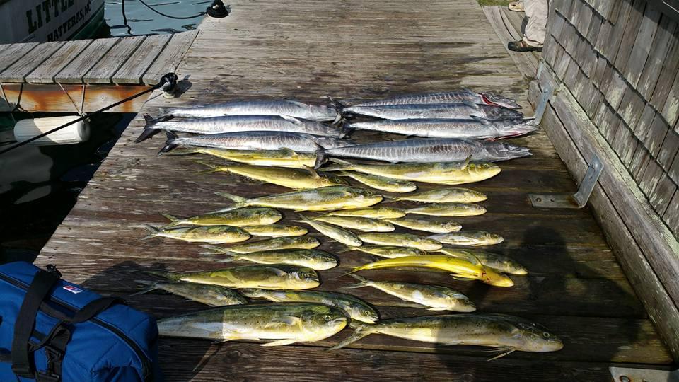 Hatteras Fishing Report 8/24/2015