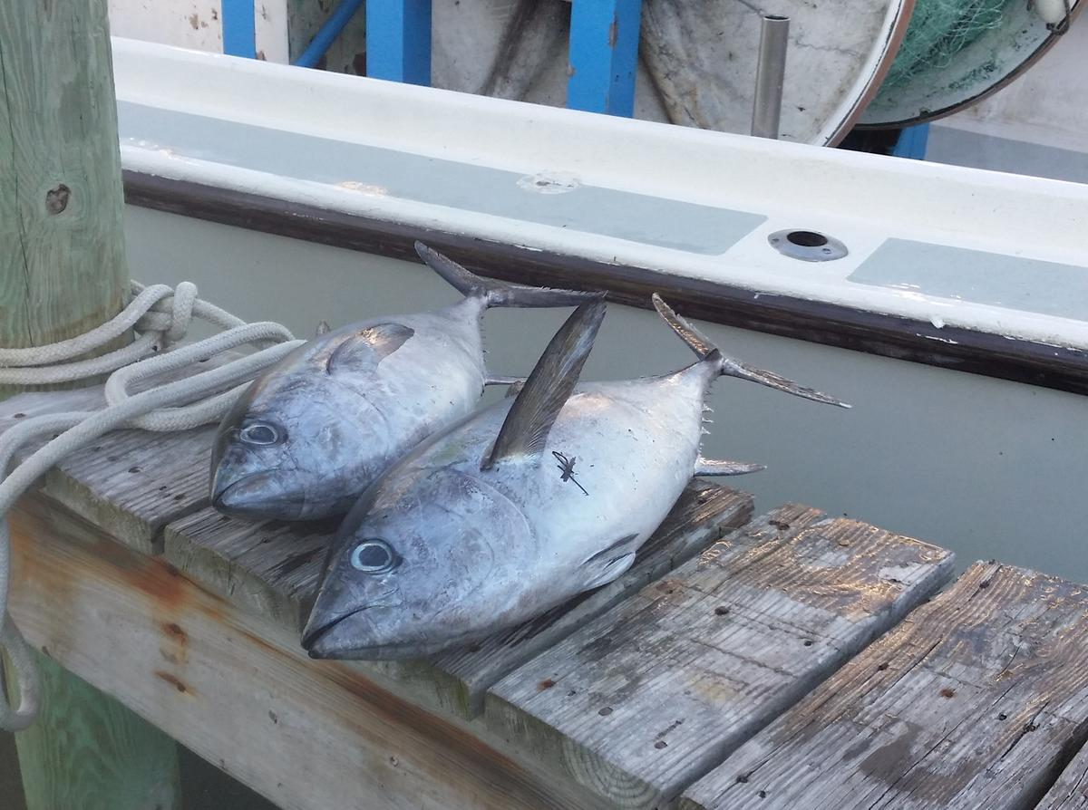 Hatteras Fishing Report 1/22/2015