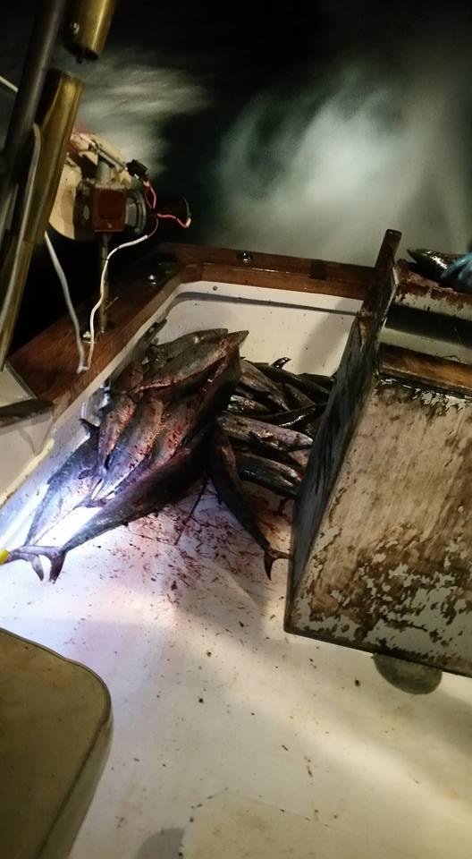 Hatteras Fishing Report 12/29/2015