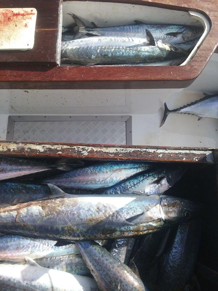 Happy Thanksgiving Hatteras Fishing Report