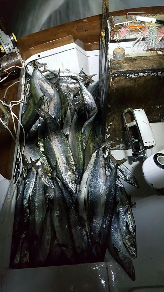 11/02/2016 Hatteras Fishing Report