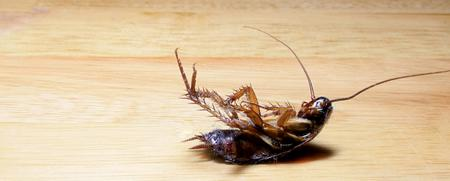 Why the Cockroach is One of the Most Hated Pests