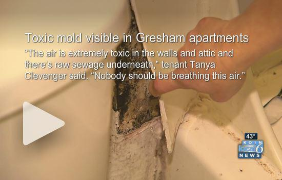 Toxic mold visible in Gresham apartments