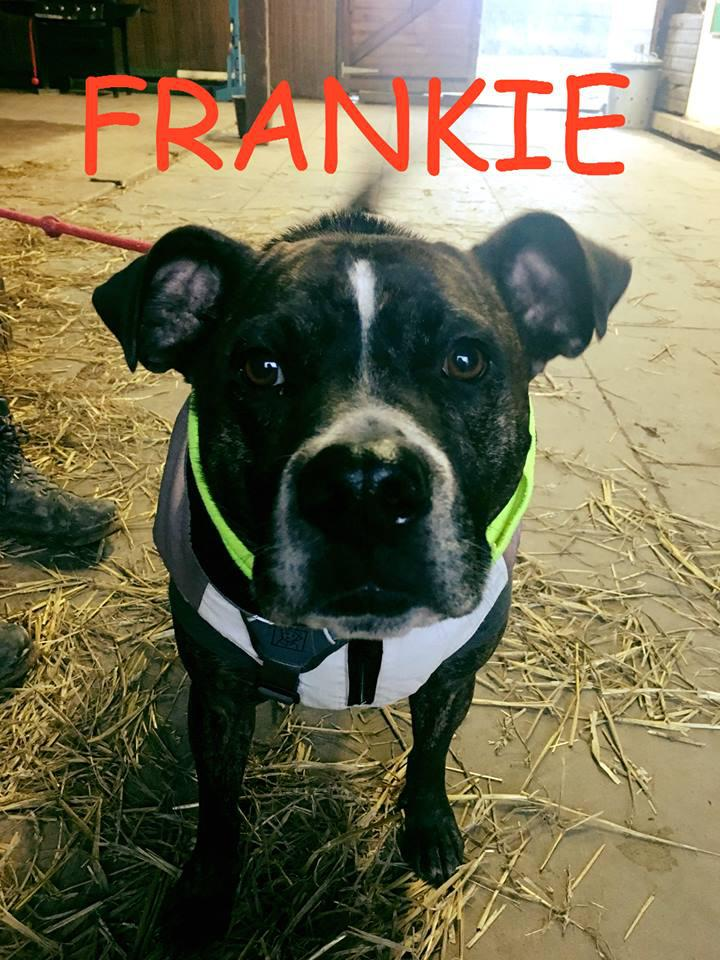 Meet Rescue Dog Frankie.�