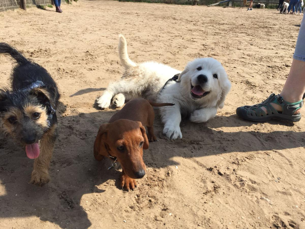 Training Tip of the Week - Puppy Socialisation
