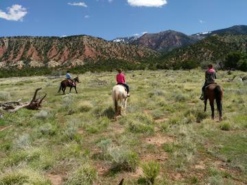 Zion and Bryce Canyon Utah: A Pinyon-Juniper Woodland