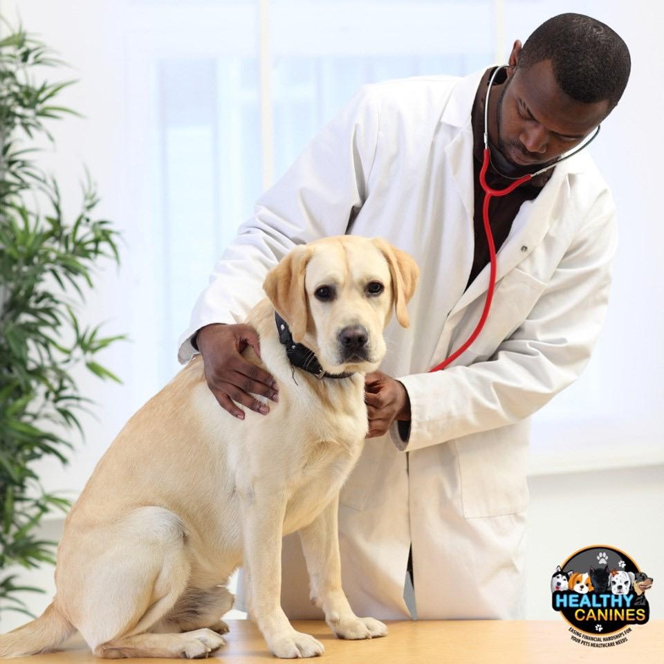 3 Reasons You Should Take Your Dog to the Vet for Regular Checkups