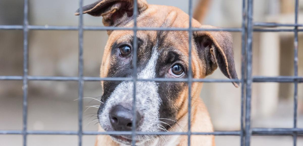 4 Ways to Help a Shelter Dog Feel Relaxed and Welcome at Home