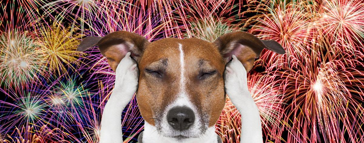How to Keep Your Dog Safe and Stress-Free During 4th of July Fireworks