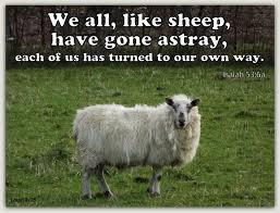 Straying Sheep