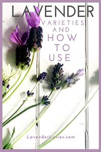 Lavender Varieties and Uses