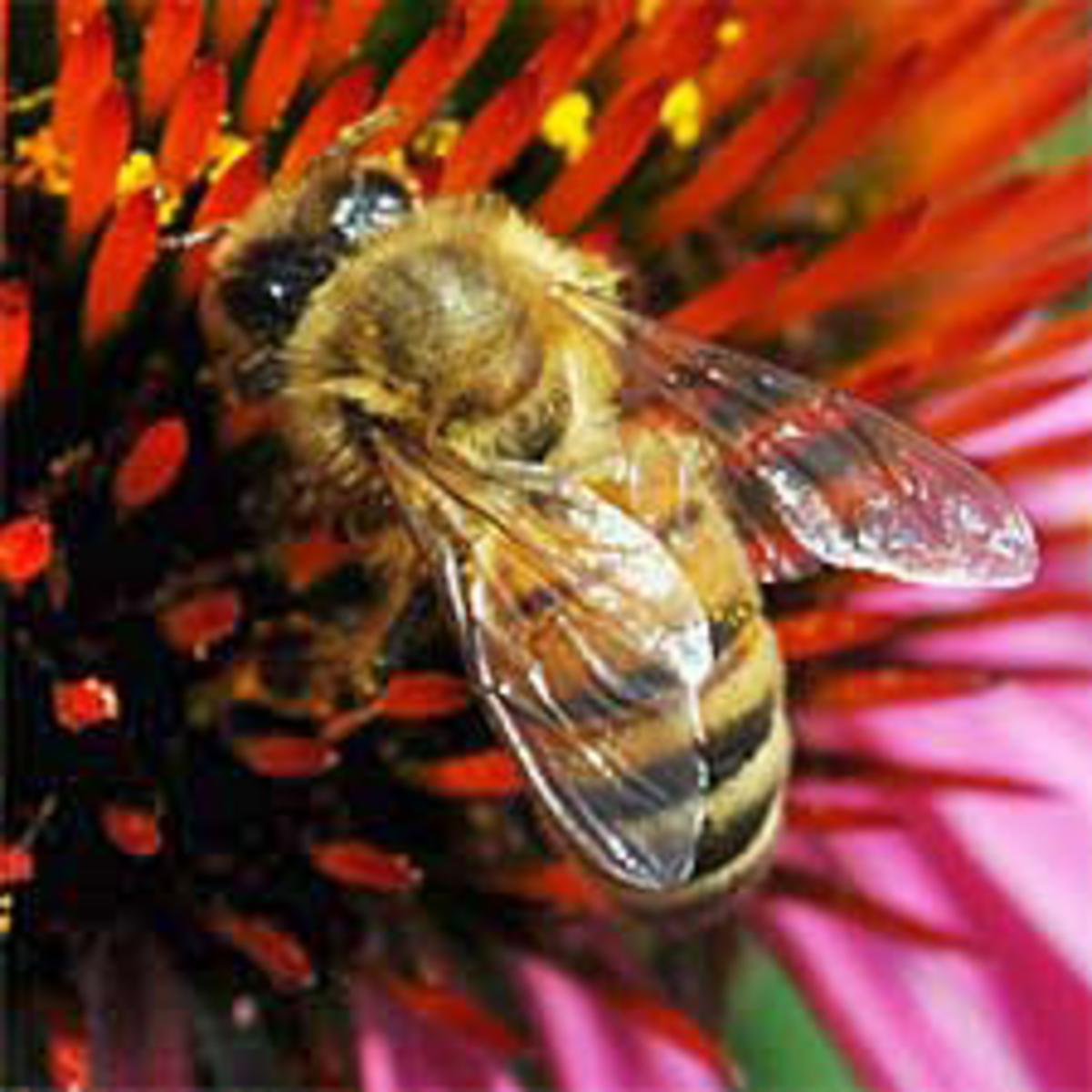 Bees Are Our Friend