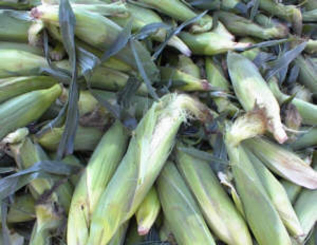 Luxurious Sweet Silky Summer Corn