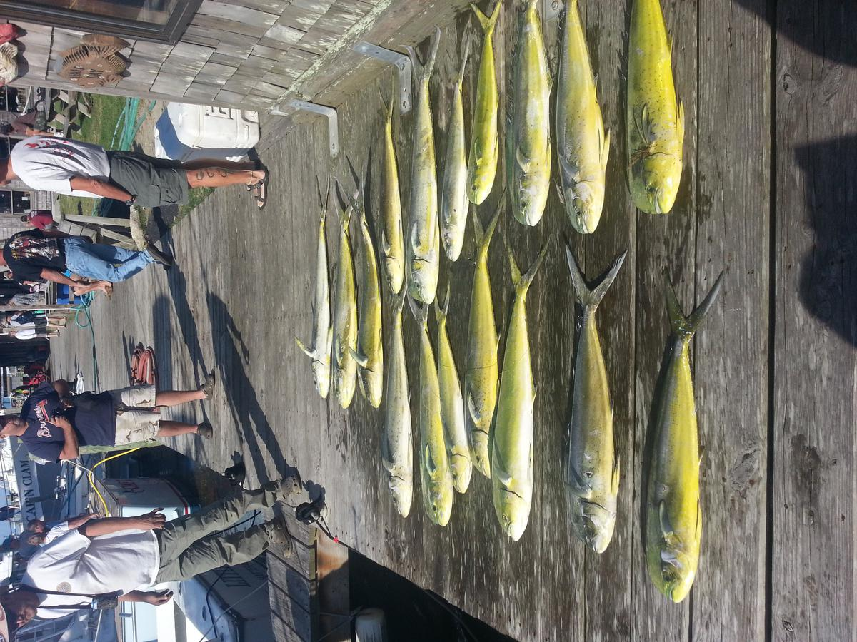 Hatteras Fishing Report 5/17