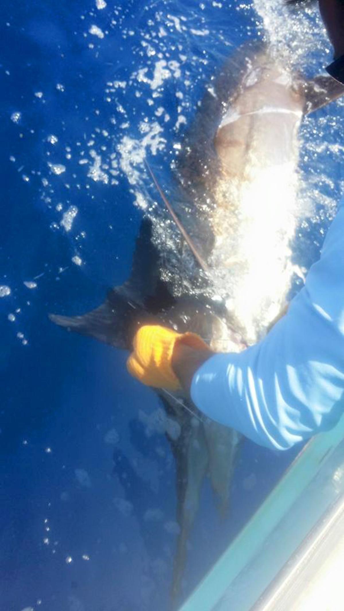 Hatteras Fishing Report 6/18/2015