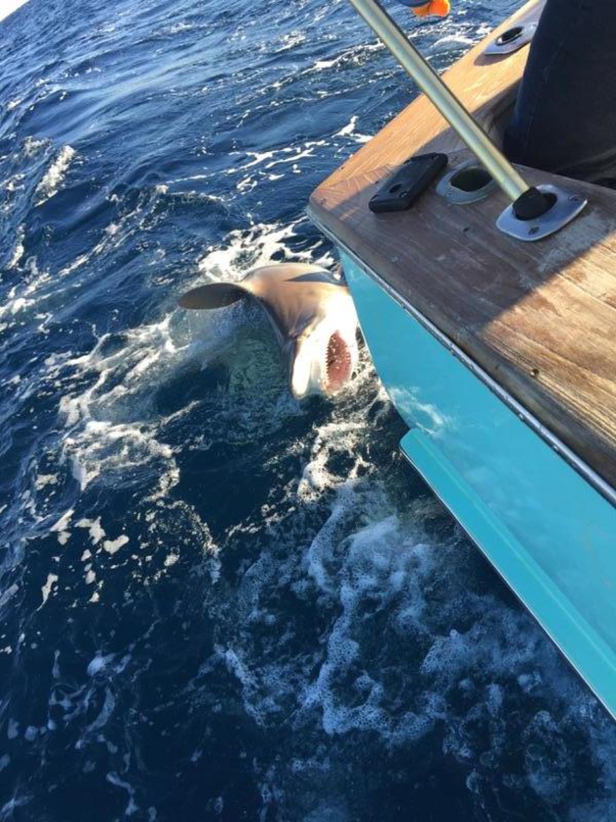 Hatteras Fishing Report 2/7/2015