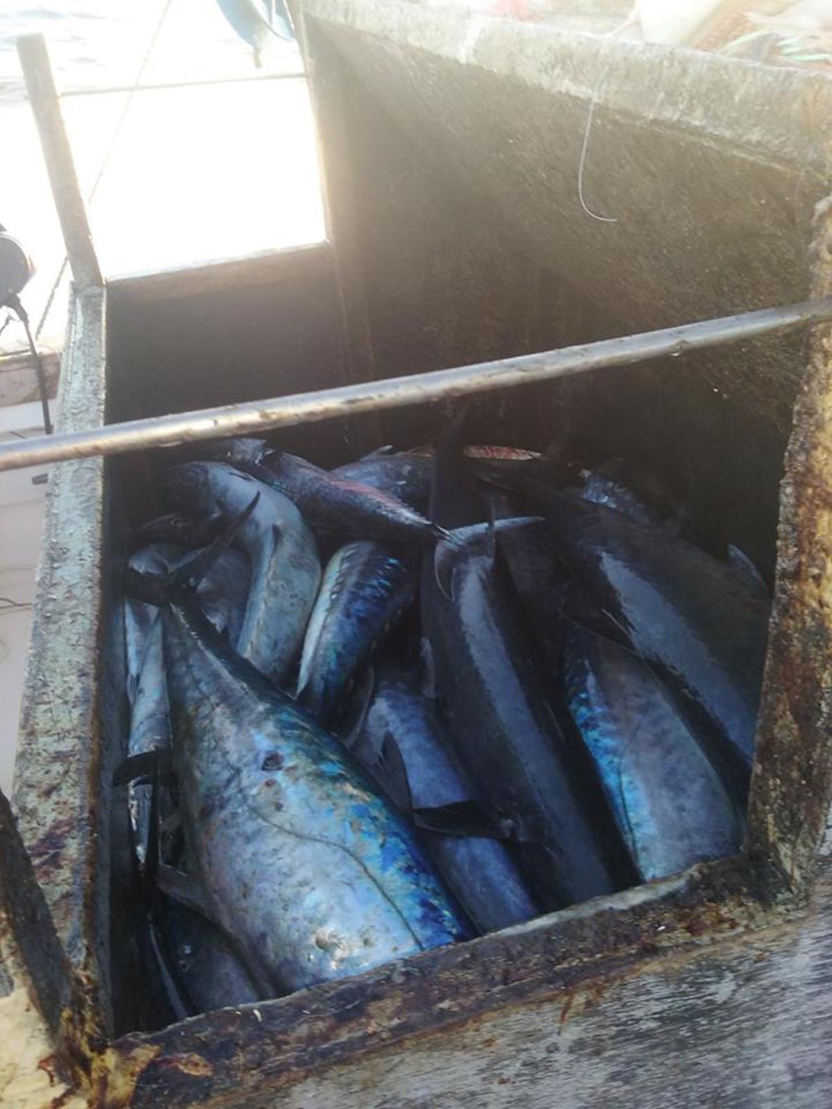 10/29/2016 Hatteras Fishing Report