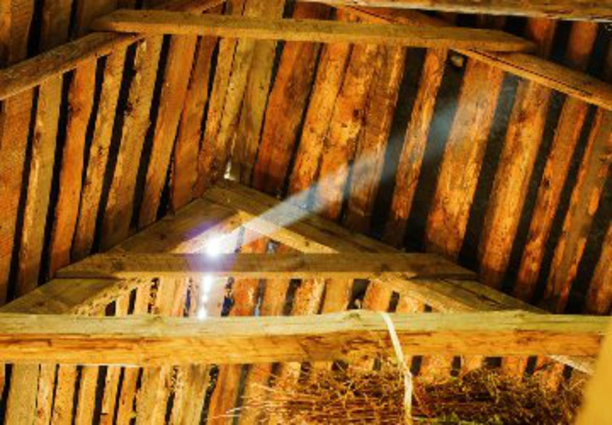 How To Keep Pests Out Of Your Attic
