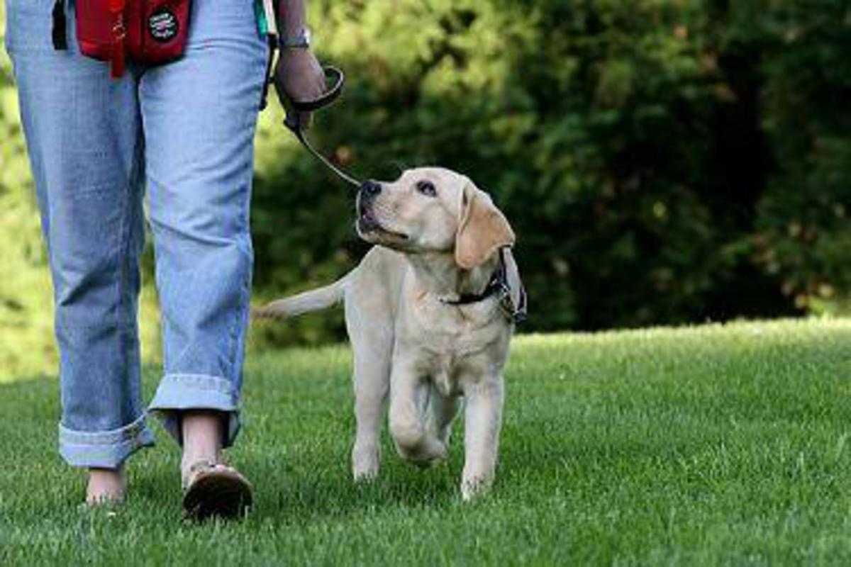 Lead walking: how to start right with your puppy?
