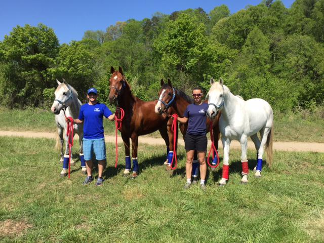 Endurance Horses Endurance Horse Training Endurance Rider