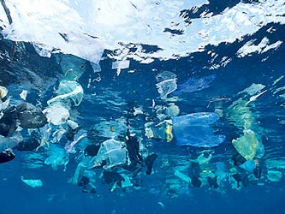 Increased Plastics in the Ocean