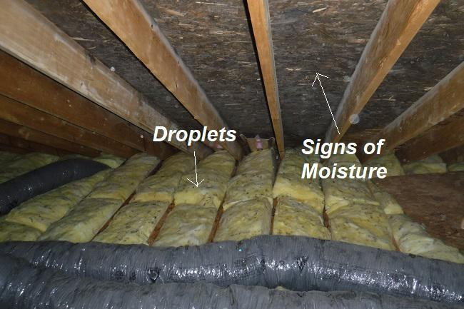 Black Mold on Attic Side of Roof Plywood