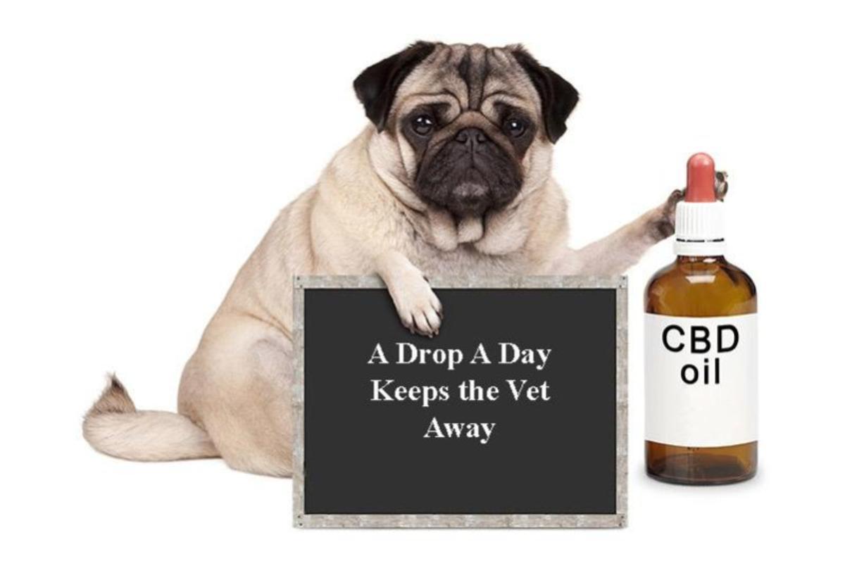 CBD Oil for Pet Health Care