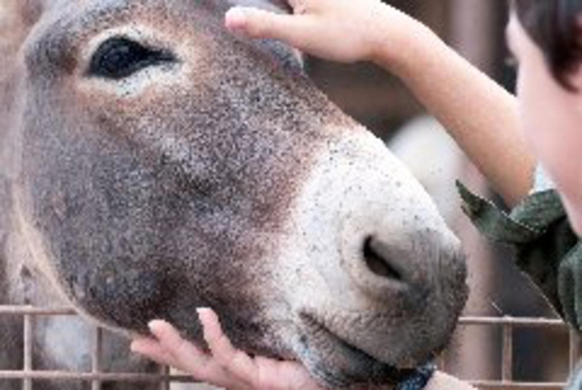 Assonance--A Donkey Poetry Challenge