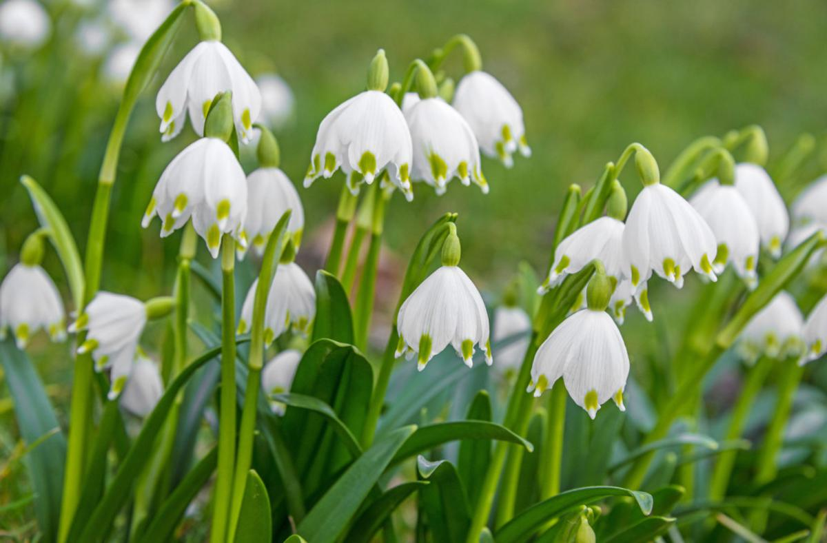 Planning Your Outdoor Space - Bulbs to Plant Now for a Stunning Garden this Spring